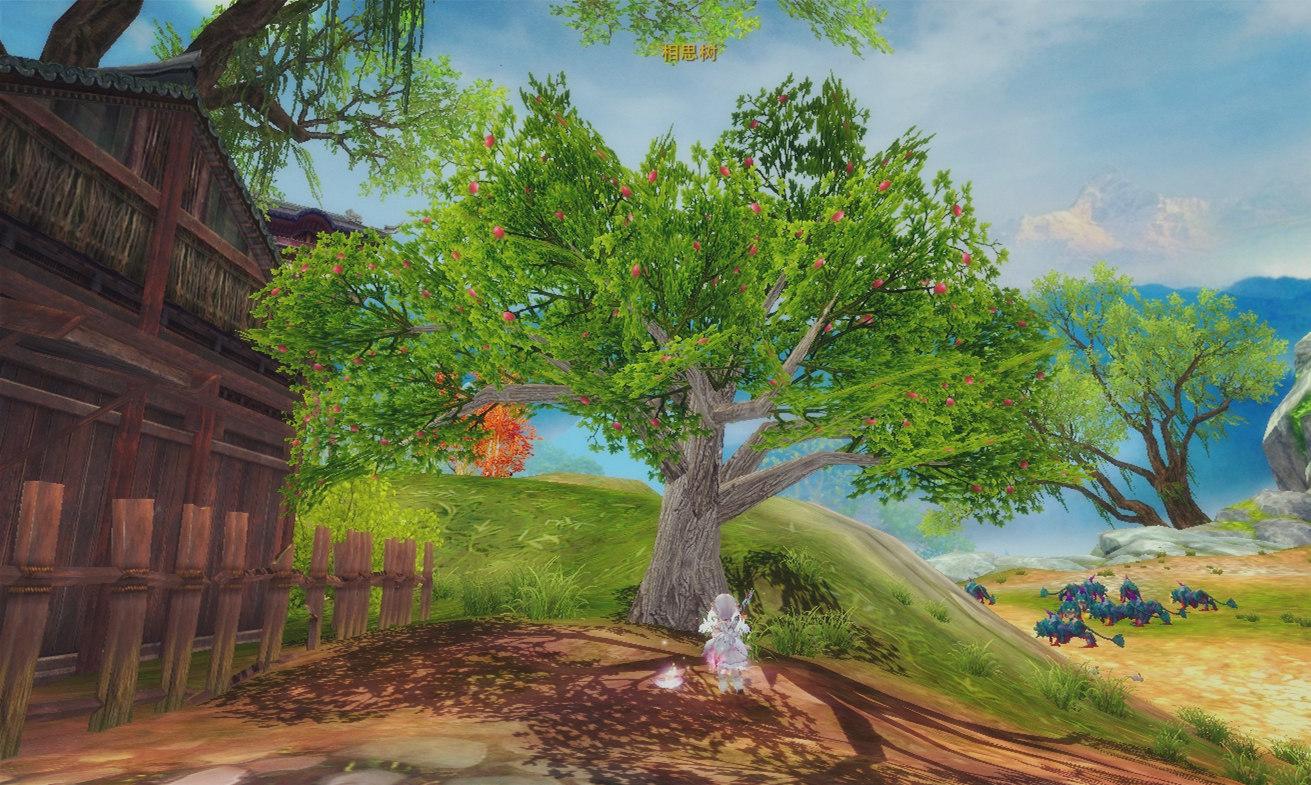图片: 开花结果的相思树.jpg